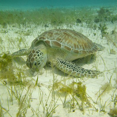 Sea Turtle During the Tour