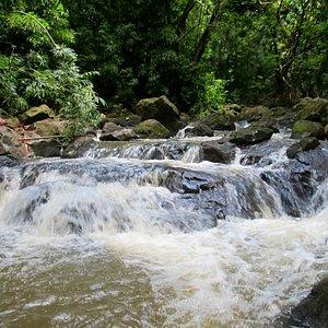 Still along the stream