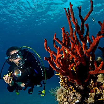 House reef at Baron Palace - Diver at reef / Taucher am Riff