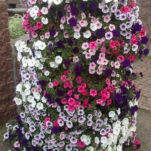 Цветущая колонна в саду Миккели