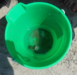 Tiny hermit crabs at Corson's Inlet