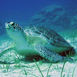 Turtles here in Protaras!