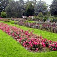 parco delle rose 2