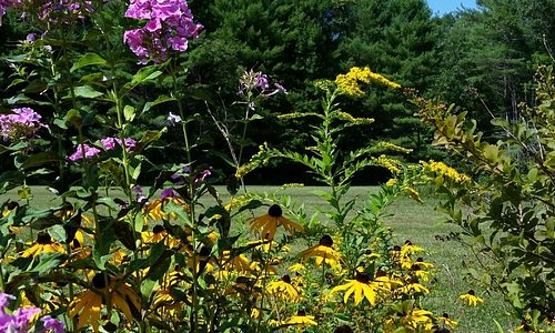 I love flowers and blue Maine skies!!!!  GMI grounds