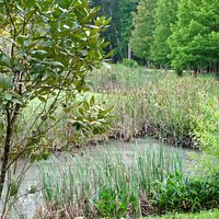 larger pond and native flora