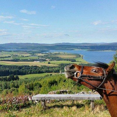 Beautiful scenery at hollingwells equestrian