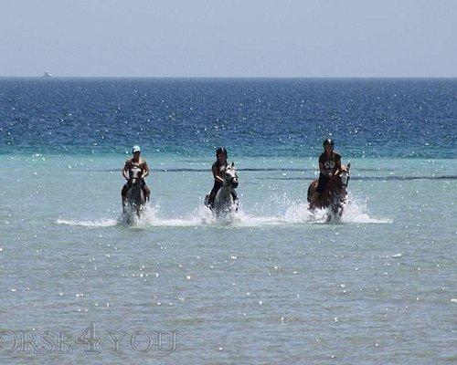 купание в море вместе с лошадьми