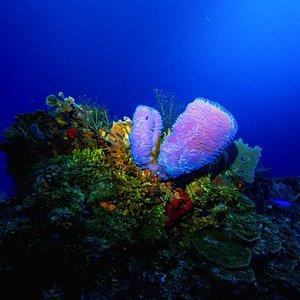 Amazing underwater scenery.
