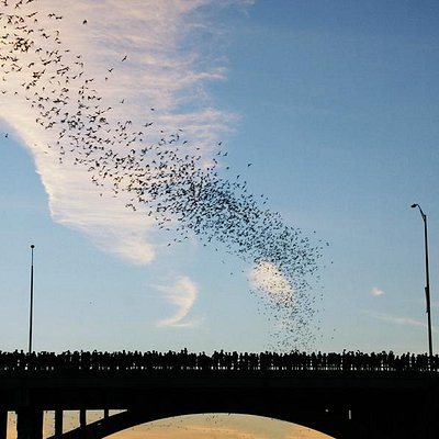 Bats Going Out for a Night on the Town