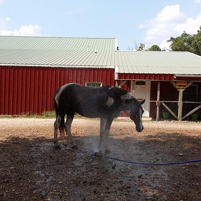 Love to play in the sprinkler after a day of riding!