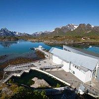 Lofotakvariet, foto Kjell Ove Storvik / Museum Nord