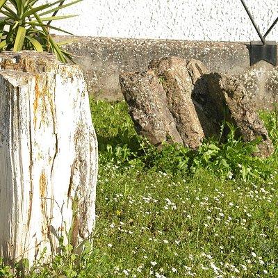 Tronchi fossili della foresta pietrificata dell'Anglona.