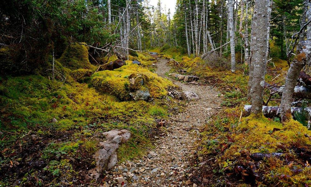 Lower Gun Hill Trail, an easy grade 45 minute walk