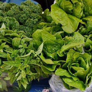 Fresh lettuces at Farmer's market stall