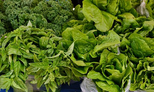 Fresh lettuces at Farmer's market stall