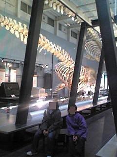2014.04 鯨の化石