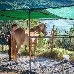 verzorging paarden