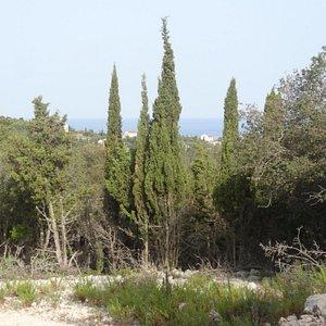Cypress Trail