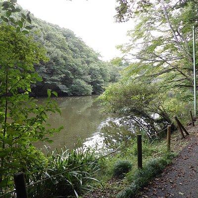 深緑に囲まれた散策路