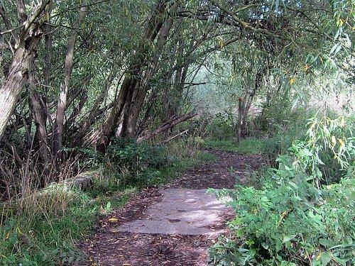 walton blue path