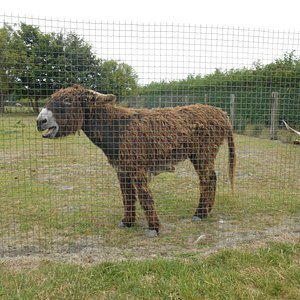 Ferme camelus