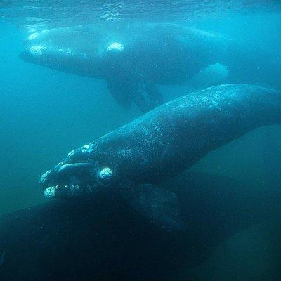 Avistaje de ballena Yellow Submarine