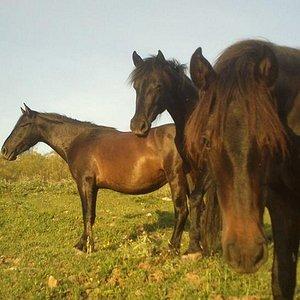 Niña and her family, Minuska and Lobo living free