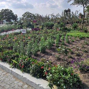 Jardim ao Redor da Capela