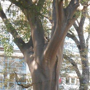 Giardino Piazza Hortiz
