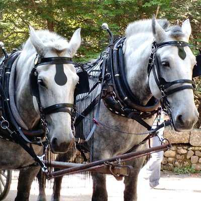 Willie and Waylon, the Carriage group ahead of us
