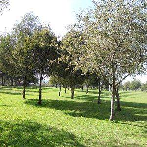 Un pedacito del Parque Bicentenario