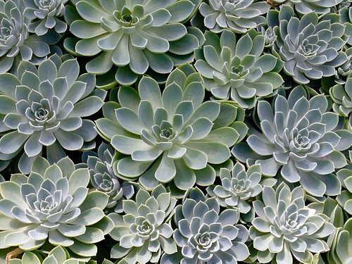 Fascinating plants!