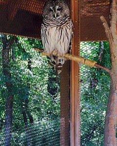 owl near the nature center