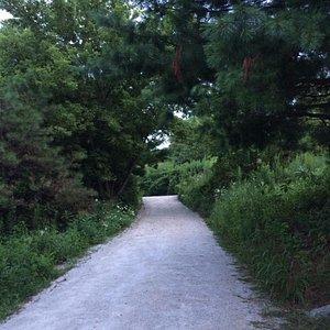 Main path