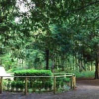 Linstows grav i Rungsted Hegn/Folehaveskoven
