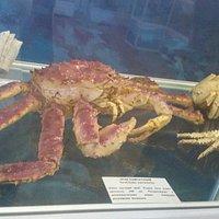 Фауны Моря Музей