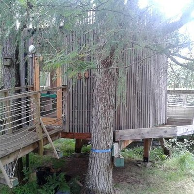 the Tree House supported by two larch trees
