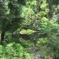 Mesozoic era ferns around the pond