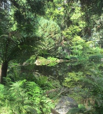 Mesozoic era ferns around the pond