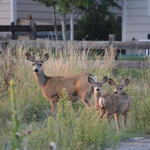 Deer family in my way