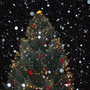 Julebyen har norges største og fineste juletre