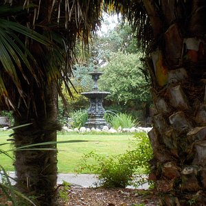 Palm trees, Morrab Gardens, Penzance