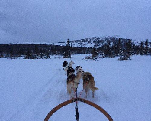 Polardog Mountain Lodge -  Tours