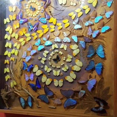 La Maison des Papillons