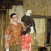 águia símbolo dos EUA