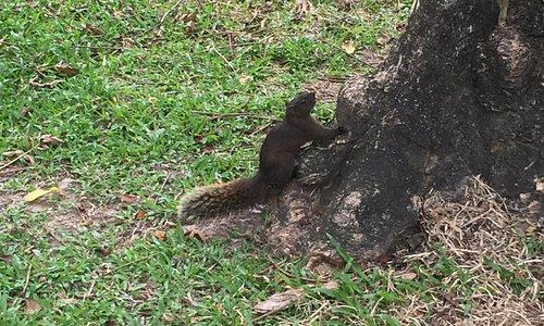 公園內的松鼠