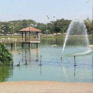 Lago dentro do parque. Bom lugar para passar o fim de tarde.