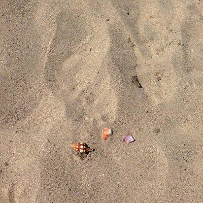 Colourful shells