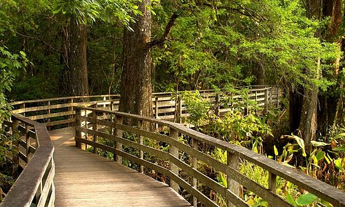 Boardwalk at Corkscrew Swamp Sanctuary
