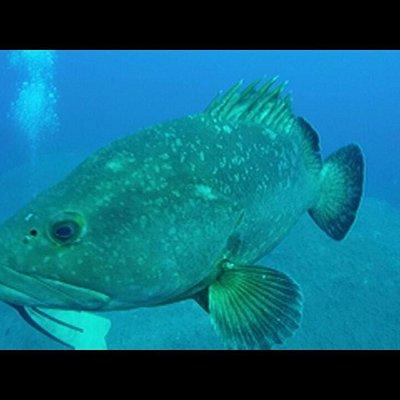Anthias Diving 2015